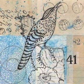 Cactus Wren by Randall Plowman