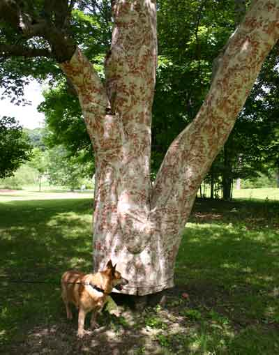 Hmm, a dog and a tree. What could possibly go wrong?