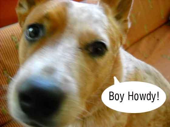 boyHowdy
