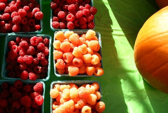 The Taft Farm's raspberries and pumpkins