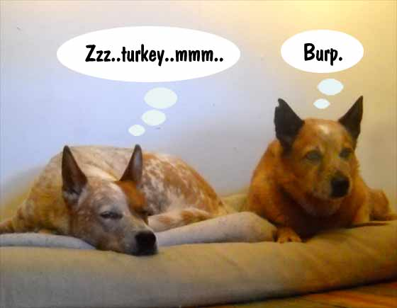 TurkeyDogs