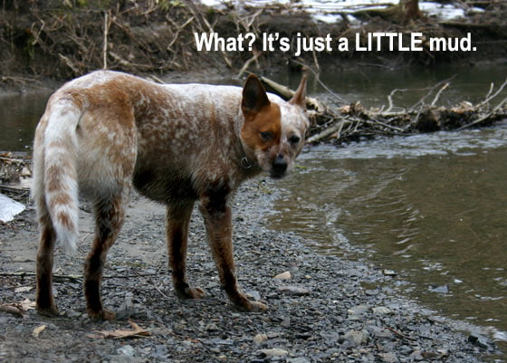 What? It's Just A Little Mud.