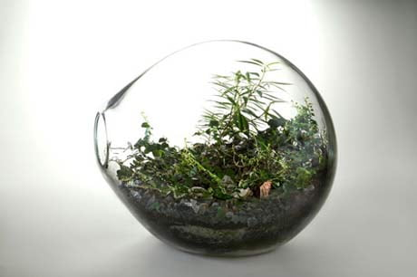 Paula Hayes, Dome Shaped Hand Blown Glass Terrarium with Miniature tropical tree and fern,