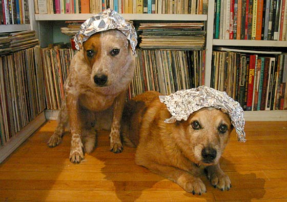 Dogs in tin foil hats