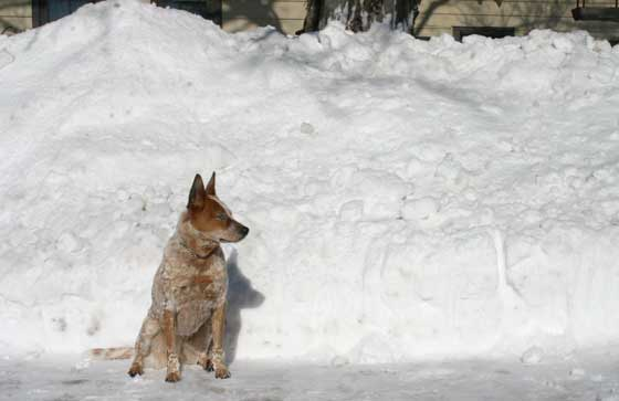 Big Snow, Little Dog