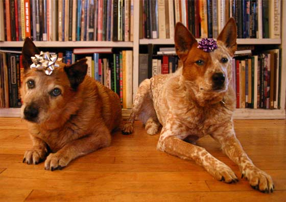 Dogs With Bows On Their Heads