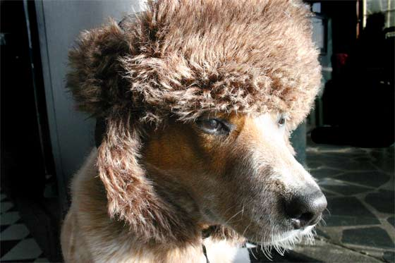 Does this hat make me look too poodle-ish?