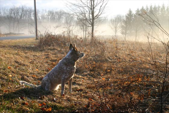 Misty Doggy