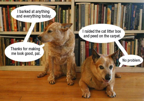 Canine Conspiracy