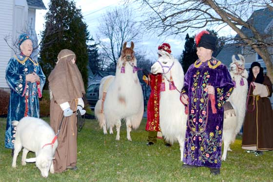 A Nativity with llamas