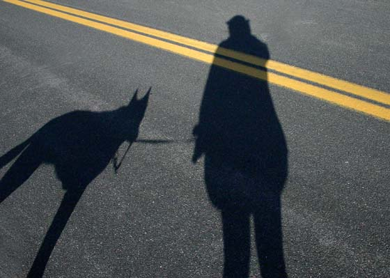 I'm being followed by a dog shadow.