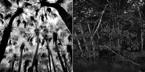 Benjamin Dimmitt: Palm Hammock, Titusville, Florida and Debi Milligan: First Light, Last Light #1 @ Davis Orton Gallery