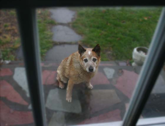 Let me in. I need to go back out again.