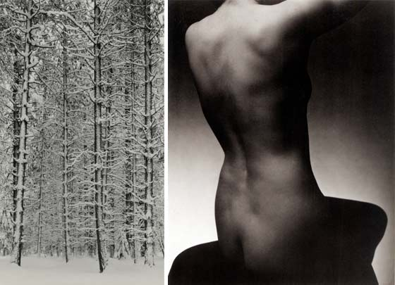 (left) Ansel Adams: Trees and Snow; (right) Edward J. Streichen: Nude Torso @ The Hyde Collection
