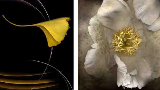 Works by Kim Kauffman @ Galerie BMG