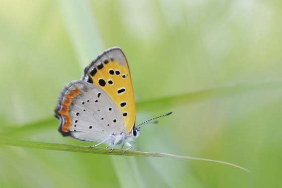 Butterflies @ Berkshire Museum