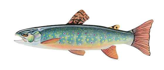 Andrew Thompson: Adirondack Brook Trout @ Courthouse Gallery