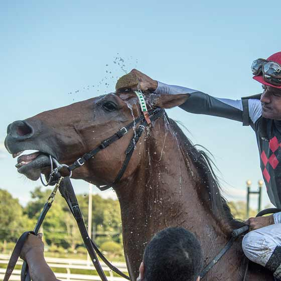 Jockey Kent Desourmeaux, cooling down winner Texas Red with some ice water over the head, as he heads to the winners' circle after the Jim Dandy Stakes, 8/1/2015.