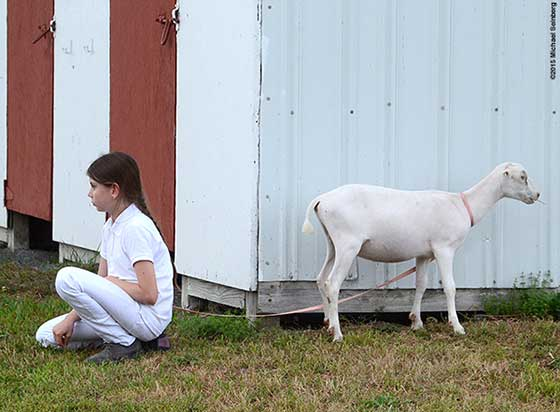 A girl and her goat agree to disagree about their recent judging.