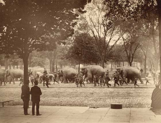 Circus Parade, Albany c. 1880 @ Albany Institute of History and Art