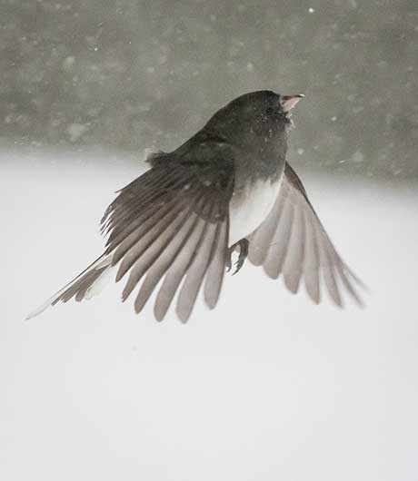 Sarah Hoe Sterling: Blizzard Junco @ Spencertown Academy Arts Center