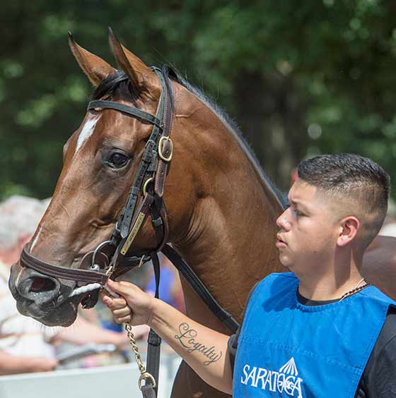 2  year old filly, Money Purse, is led into the paddock to prepare for its first race, 8/9/2017.