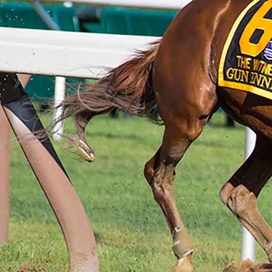Detail of the horseshoe entangled in Gunrunner's tail.  Curious Giant had lost the shoe during the race, 8/5/2017.