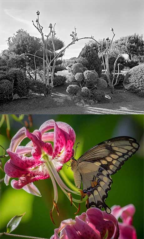 (top) Vaughn Sills: Pearl Fryer's Garden, Bishopville, North Carolina and (bottom) Sarah Sterling: Swallowtail and Lily @ Davis Orton Gallery